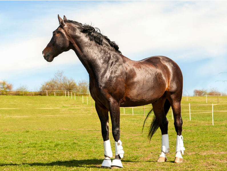The Benefits of Supplements For Horse